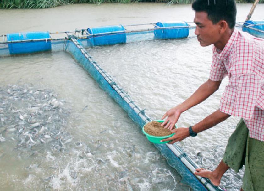 အိန္ဒိယက မျိုးမြှင့်တင် ငါးမြစ်ချင်းသားပေါက်များ မှာယူတင်သွင်းခွင့်ရဖို့ ငါးမွေးမြူရေးလုပ်ငန်းရှင်များတောင်းဆို