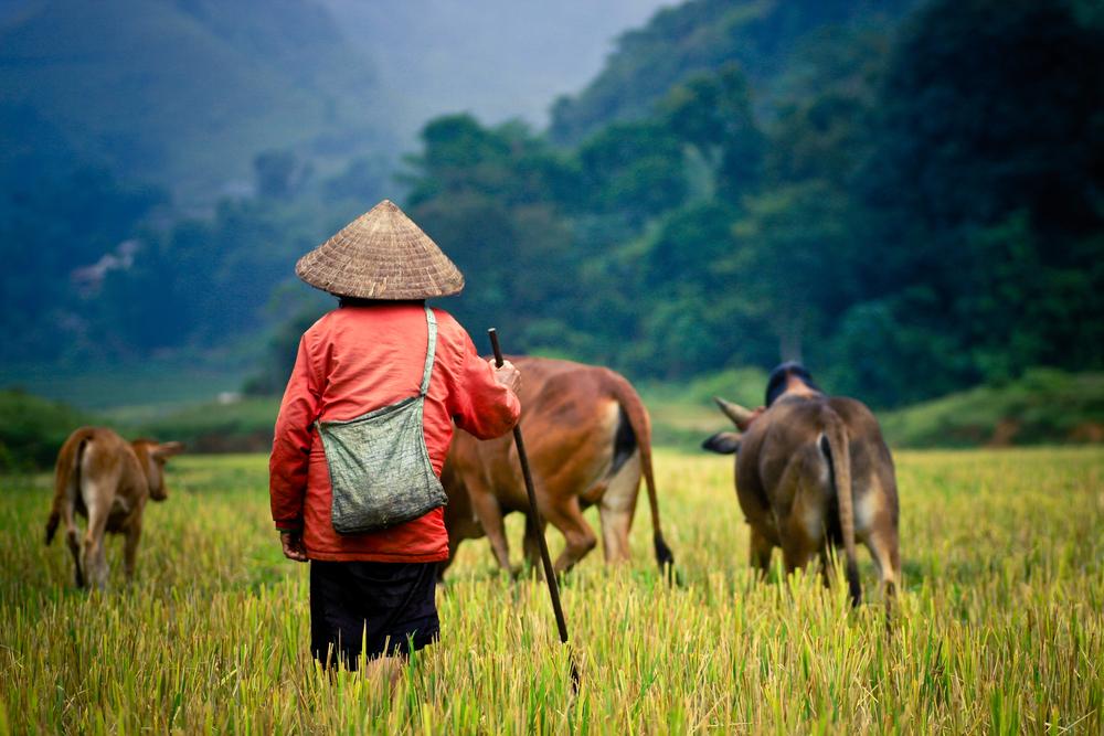 မြန်မာနိုင်ငံ ရာသီဥတုစံနှုန်းတွေ ပြောင်းလဲမှုများအတွက် တောင်သူများသိရန်လို