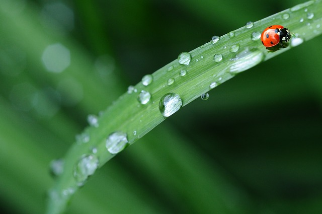 ၂၀၁၉ ခုနှစ်၊ ဩဂုတ်လ ပထမ(၁၀)ရက်ပတ်အတွက် မိုးလေဝသခန့်မှန်းချက်