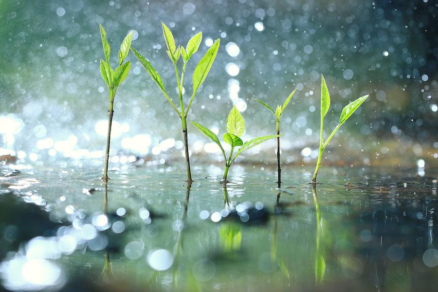 တနင်္သာရီတိုင်းဒေသကြီးတွင် နေရာအနှံ့အပြား၊ ချင်းပြည်နယ်တွင် နေရာကျဲကျဲနှင့် ကျန်တိုင်းဒေသကြီးနှင့် ပြည်နယ်တို့တွင် နေရာကွက်ကျား မိုးထစ်ချုန်းရွာမည်။