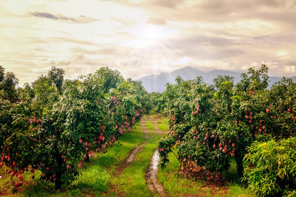 ''အေးအေးချမ်းချမ်းနေချင်လို့ စိုက်ပျိုးရေးလုပ်မည်ဆိုလျှင် ဒီစာလေးအရင်ဖတ်ပါ''