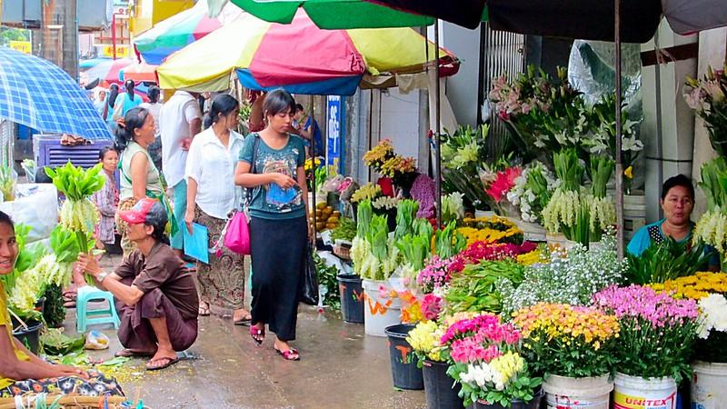 မိုးရွာသွန်းမှုကြောင့် ပန်းစိုက်ပျိုးတင်ပို့သူများ အရောင်းမသွက်