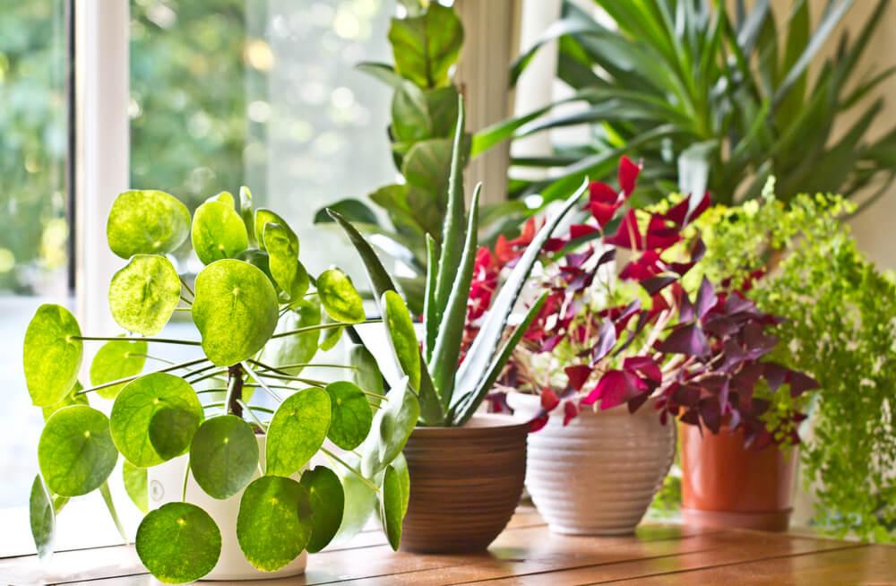 အိမ်တွင်းစိုက်အပင်လေးတွေအတွက် အိုးကို ဘယ်လိုရွေးချယ်မလဲ