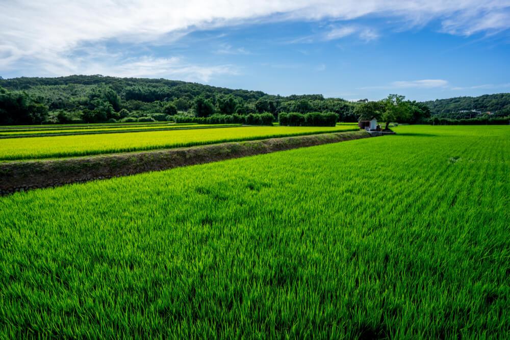 ကျိုက်မေရာမြို့ရှိ လယ်ဧက ၁၀၀ ကျော်ကို ကန်ထရိုက်လယ်ယာစနစ်ဖြင့် ဆောင်ရွက်နိုင်ရန် တရုတ်နှင့်ဆွေးနွေးနေ