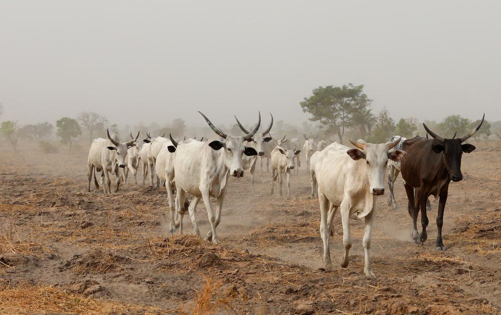 မွေးမြူရေးတိရစ္ဆာန် ကူးစက်ရောဂါ ကြိုတင်ကာကွယ်ရေး သတိပေး နှိုးဆော်