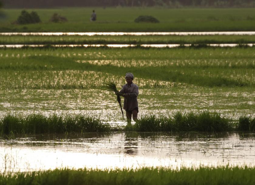 မြန်မာ့လယ်ယာဖွံ့ဖြိုးရေးဘဏ် ကျပ်သန်း ၁၀,ဝဝဝ ကျော်ထုတ်ချေးထား၊ ချေးငွေဆက်လက်လျှောက်ထားနိုင်