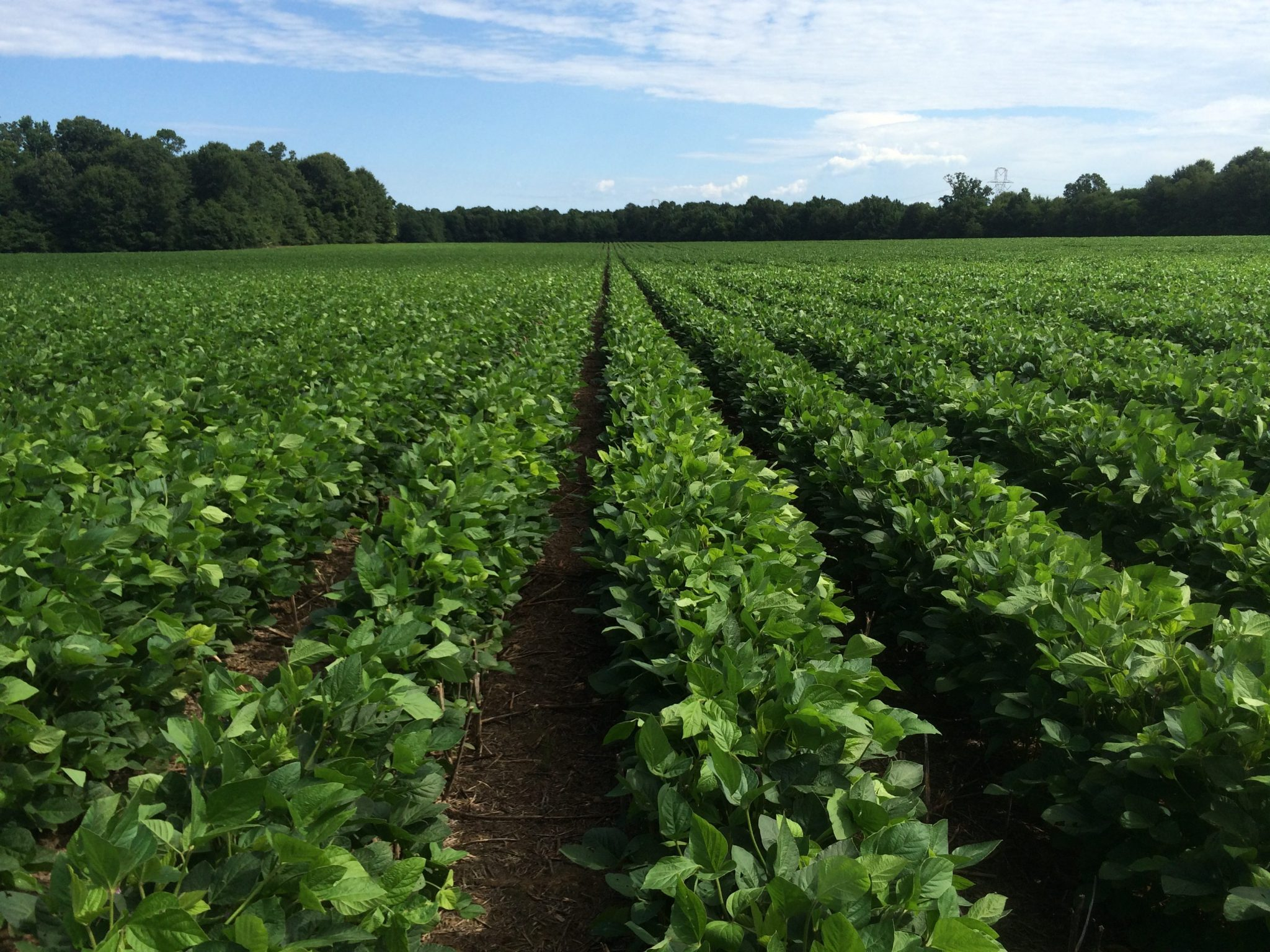 ပဲပုပ်ကို စီးပွားဖြစ်သီးနှံအဖြစ် အစားထိုးစိုက်ပျိုးလာရေး ကချင်ပြည်နယ်တွင် စီမံချက်များချမှတ်ဆောင်ရွက်မည်