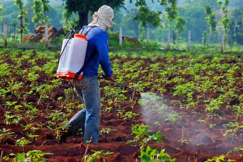 တောင်သူများနှင့်စားသုံးသူများအတွက် သဘာဝပတ်ဝန်းကျင်ကင်းရှင်းရေးအတွက် ပိုးသတ်ဆေးဘယ်လိုသုံးမလဲ