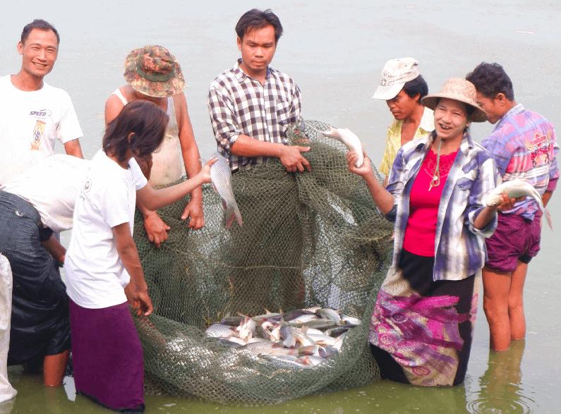 ရွှေပေါ်ကျွန်းရပ်ကွက်၊ ရွှေဘိုမြို့မှ ငါးမွေးတောင်သူ  ဒေါ်သန်းညွန့်၏ အောင်မြင်မှုအပိုင်းကဏ္ဍများ