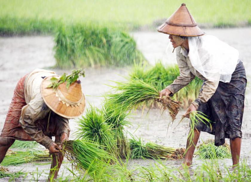 တောင်သူလယ်သမားကြီးများအတွက်နှိုးဆော်ချက် (ဇွန်လ၊ ၂၀၁၉)