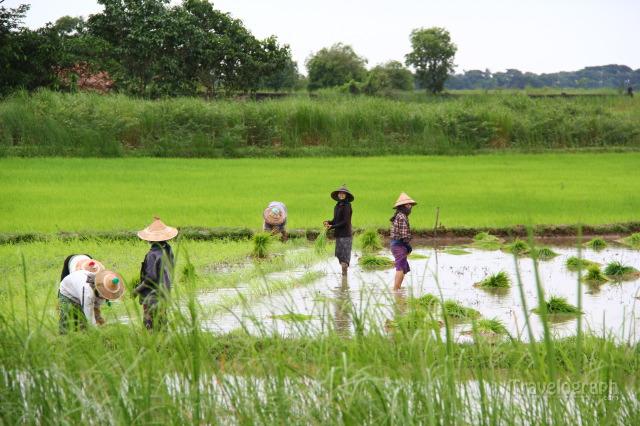 တောင်သူလယ်သမားကြီးများအတွက်နှိုးဆော်ချက် (သြဂုတ်လ၊ ၂၀၁၉ )