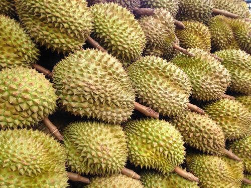 ဒူးရင်းသီးအစေ့များ ဝယ်ယူနေခြင်းကြောင့် ဒူးရင်းသီးအမှည့်ရှားပါးလာ