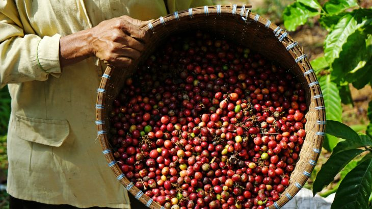 မြန်မာ့ကော်ဖီပွဲတော် (Coffee-Fair 2019) ကျင်းပသွားမည်