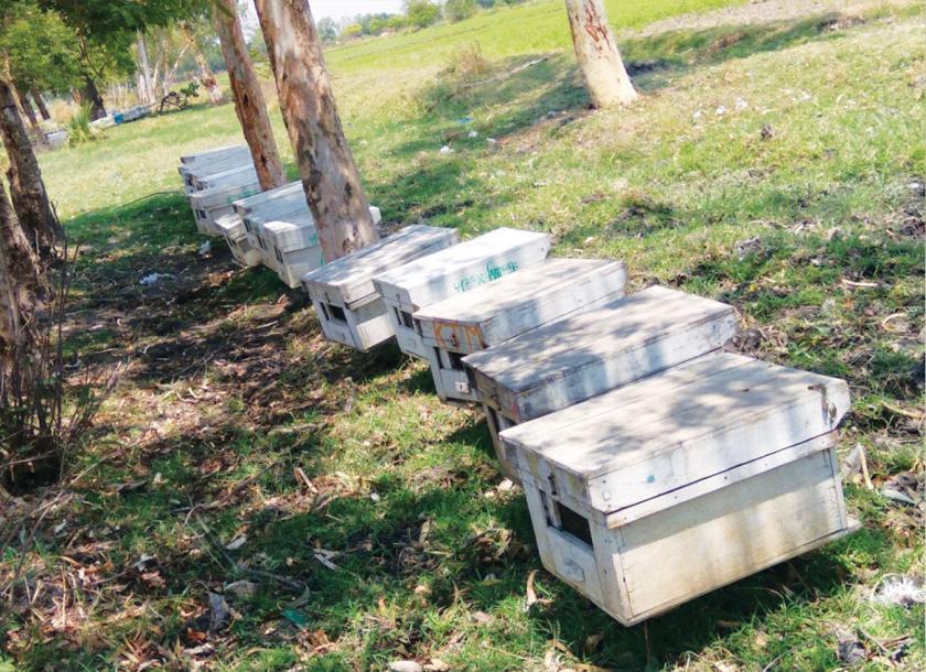 မကွေးတိုင်းအတွင်း တစ်နှစ်လျှင် ပျားရည်တန်၂၅၀ကျော်ထုတ်လုပ် ပြည်ပဈေးကွက်သို့ နှစ်စဉ် တန်၂၀ဝကျော်တင်ပို့ရောင်းချလျက်ရှိ