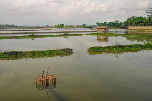 စိုက်ပျိုးထုတ်လုပ်သူတောင်သူလယ်သမားများဆောင်ရွက်သင့်သော သီးနှံစိုက်ခင်းများ ရေကြီးနစ်မြုပ်နိုင်မှုအန္တရာယ်လျှော့ချနိုင်ရေးလုပ်ငန်းစဉ်