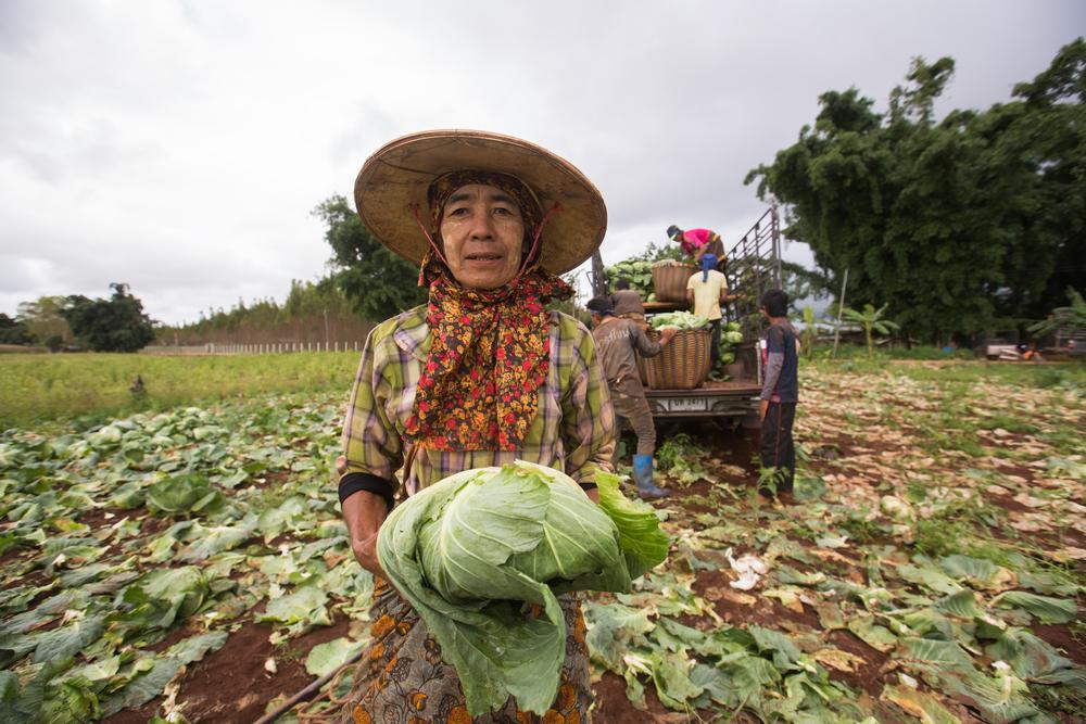 ဂေါ်ဖီဈေးနှုန်းအတက်ကြမ်း၍ စားသောက်ဆိုင်အများစု ကြက်သွန်နီ၊ သင်္ဘောသီးဖြင့် အစားထိုးရောင်းချလာကြ