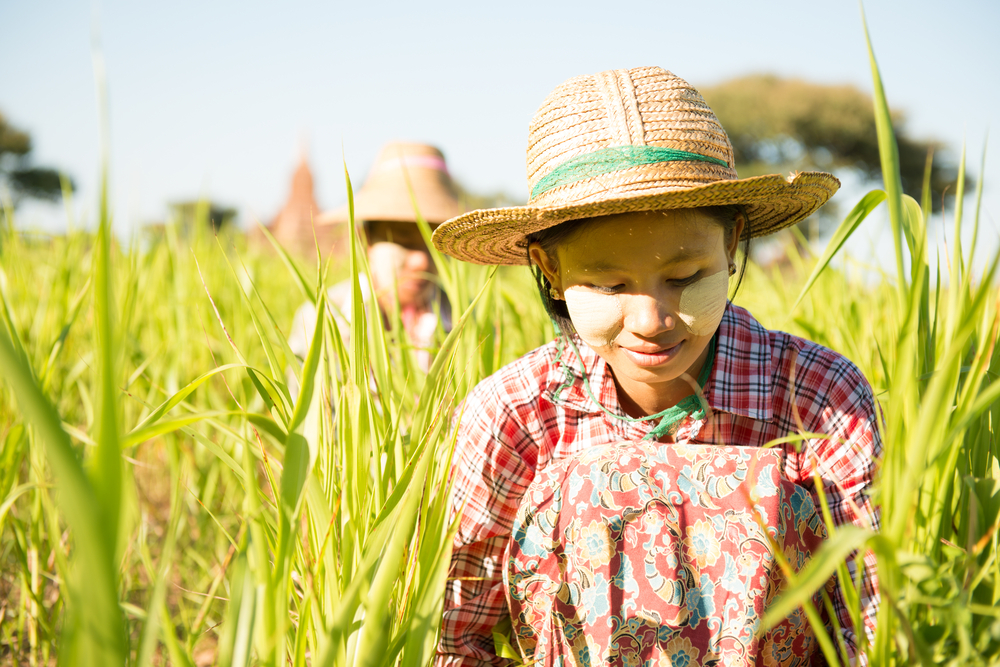 နိုင်ငံတော်၏အတိုင်ပင်ခံ ဒေါ်အောင်ဆန်းစုကြည်နှင့် တောင်သူလယ်သမားများတွေ့ဆုံမည်