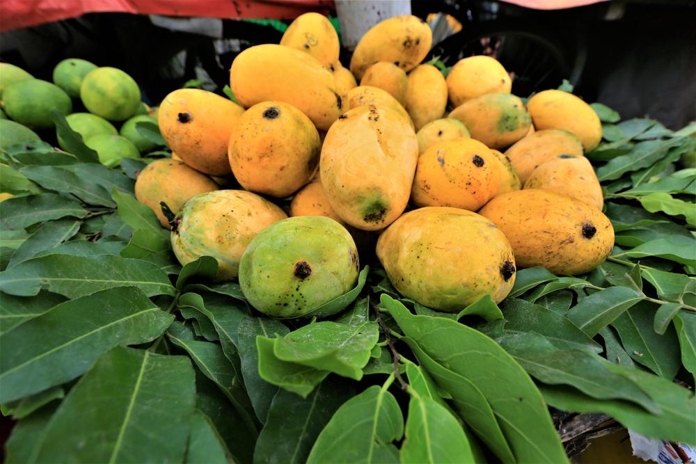 သရက်သီးများ၌ ဓာတ်ကြွင်းဓာတ်များ ကျန်ရှိ၊ မရှိ လာရောက်စစ်ဆေးနိုင်