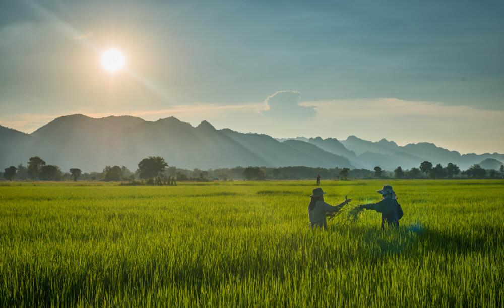 တောင်သူလယ်သမားကြီးများအတွက်နှိုးဆော်ချက် (စက်တင်ဘာ၊ ၂၀၁၉ )