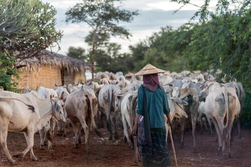 မွေးမြူရေးတိရစ္ဆာန်များ ရေးဘေးအန္တရာယ် ကာကွယ်ရေးနှိုးဆော်ချက်
